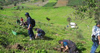 Reforestando Quetzaltenango