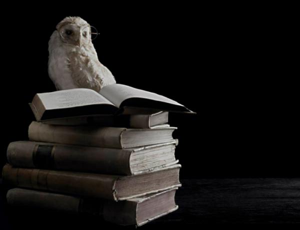 23 de Abril Dia Internacional del Libro – GHL Training School