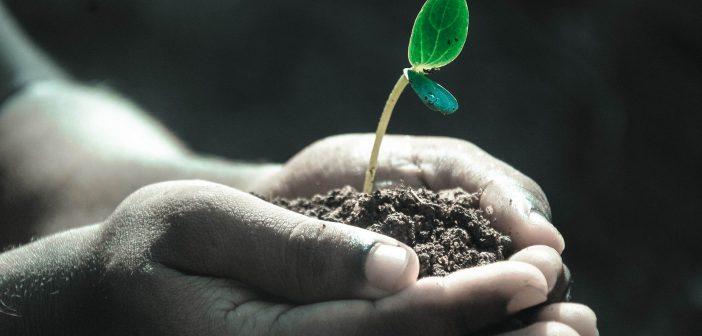 ¿Como ven los huéspedes nuestro compromiso ambiental- GSI?